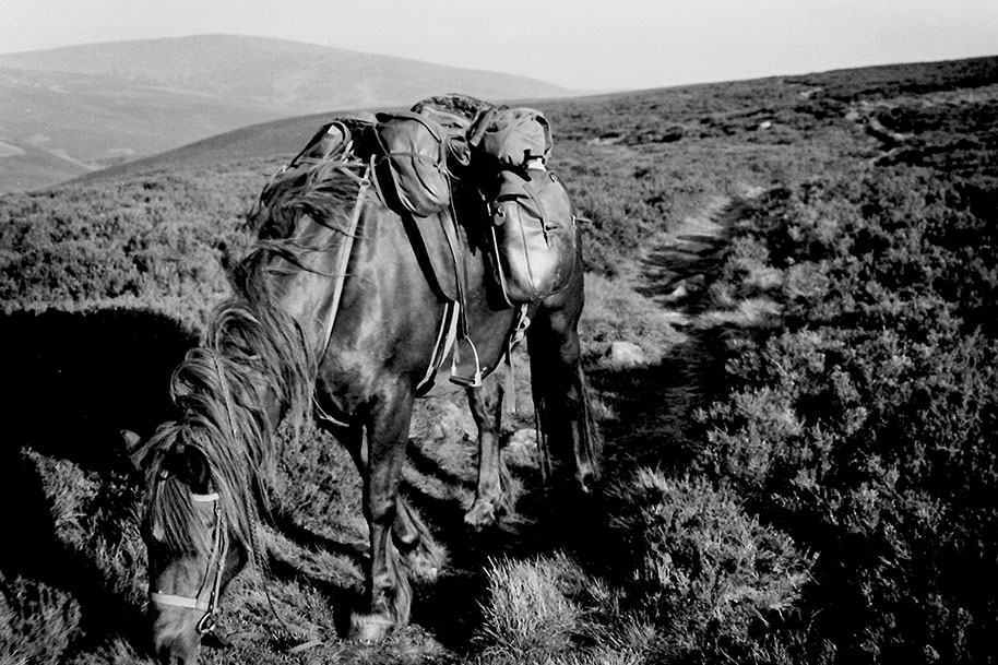 Collage of photos of horse,saddle and road from Eye on the Hill: Horse Travels in Britain